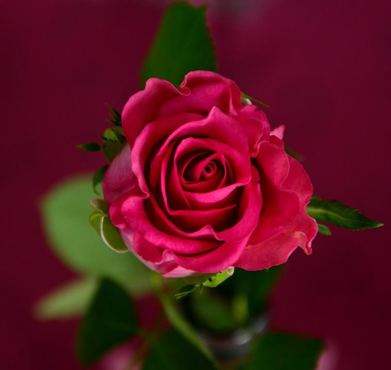 Hearts N Flowers Florist